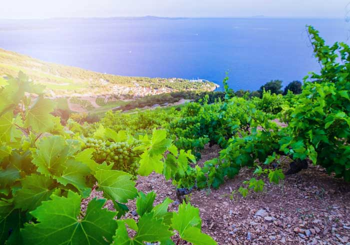 Hvar vineyard – Croatian luxury honeymoon, Travelive